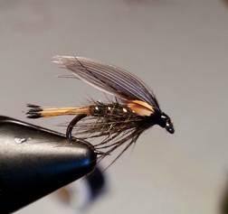 Blae Wing Sooty Olive.