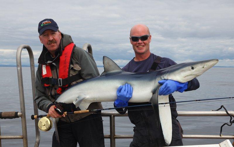 Rudy en Tom met een 55 tot 60 pond zware blauwe haai, gevangen met de vlieg.