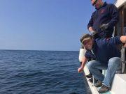 Ben's grote zeskieuwenhaai had een geschat gewicht van 810 pond en levert hem de Vangst van de Week op.