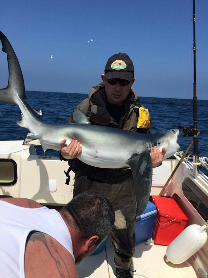 Blauwe haai in de boot, de eerste van 2017.