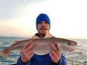 Izaak's wijting was precies 60 cm lang op de meetlat en omdat hij een geoefende sportvisser is zal hij zijn specimen ook zeker claimen. Het levert hem alvast de Vangst van de Week op.