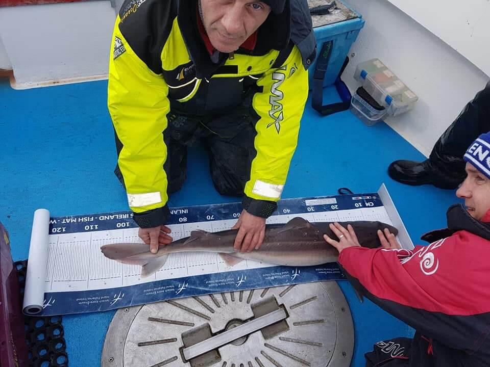 De doornhaai is een van de vissoorten waarvoor een specimen op basis van de lengte geclaimd kan worden. Een scherpe foto van de vis op een meetmat, zoals deze die beschikbaar zijn van Inland Fisheries ireland, is perfect.