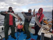 Een opname met drie specimens! Owen Trill, Paddy O'Farrell en Stuart Regan haakten alle drie vrijwel tegelijk een vis en dit was het resultaat!