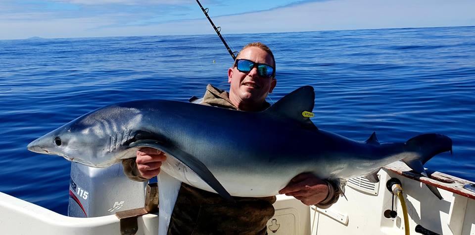 Blauwe haai – hij is er bijna… #CPRsavesfish