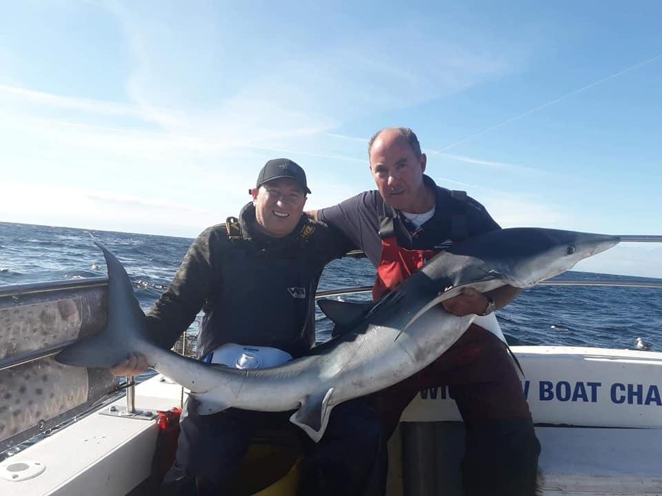 Blauwe haai.